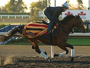Joshua Tree works at Woodbine on 10/25/2013.