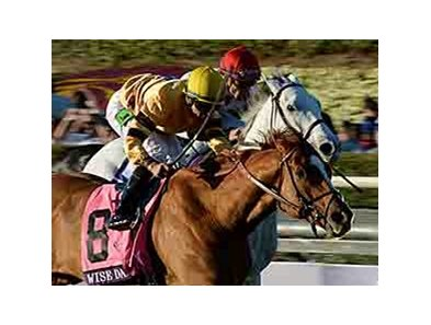 "Wise Dan won the 2013 Breeders' Cup Mile.  <br><a target=""blank"" href=""http://photos.bloodhorse.com/BreedersCup/2013-Breeders-Cup/Mile/33150010_L6N4PX#!i=2878556322&k=hThgLmk"">Order This Photo</a>"