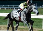 "Graydar won the 2013 Kelso Stakes. <br><a target=""blank"" href=""http://photos.bloodhorse.com/AtTheRaces-1/at-the-races-2013/27257665_QgCqdh#!i=2797010812&k=swcTMGF"">Order This Photo</a>"