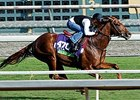 Tom's Tribute