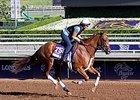 "Top Decile<br><a target=""blank"" href=""http://photos.bloodhorse.com/BreedersCup/2014-Breeders-Cup/Works/i-zBF3Gc7"">Order This Photo</a>"