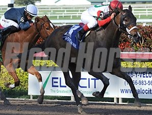 All Due Respect captures the Ocala Stakes at Gulfstream Park
