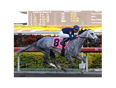"Undefeated Dunkirk will run next in the Florida Derby.<br><a target=""blank"" href=""http://www.bloodhorse.com/horse-racing/photo-store?ref=http%3A%2F%2Fpictopia.com%2Fperl%2Fgal%3Fprovider_id%3D368%26ptp_photo_id%3D7783562%26ref%3Dstory"">Order This Photo</a>"