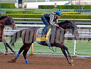 Bayern works for the Breeders' Cup Oct. 26, 2014.
