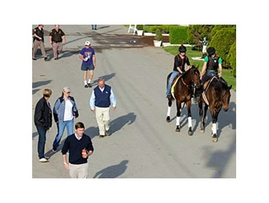 "Orb with some of his connections, including trainer Shug McGaughey and Daisy Phipps.<br><a target=""blank"" href=""http://photos.bloodhorse.com/TripleCrown/2013-Triple-Crown/Kentucky-Derby-Workouts/29026796_jvcnn8#!i=2489650681&k=qGgvc4S"">Order This Photo</a"