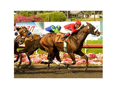 "Informed flies late to take the Californian.<br><a target=""blank"" href=""http://www.bloodhorse.com/horse-racing/photo-store?ref=http%3A%2F%2Fpictopia.com%2Fperl%2Fgal%3Fprovider_id%3D368%26ptp_photo_id%3D8243499%26ref%3Dstory"">Order This Photo</a>"