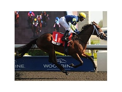 Roxy Gap won the Hendrie on the Woodbine Polytrack earlier this year.