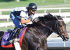 "Piscitelli<br><a target=""blank"" href=""http://www.bloodhorse.com/horse-racing/photo-store?ref=http%3A%2F%2Fpictopia.com%2Fperl%2Fgal%3Fprovider_id%3D368%26ptp_photo_id%3D8744290%26ref%3Dstory"">Order This Photo</a>"