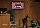 Nereid, Hip 110, sold for $1.3 million.