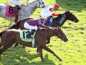 High Wire Kitten wins an allowance race at Keeneland, 10/23/2014