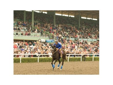 "Zenyatta says goodbye to Santa Anita.<br><a target=""blank"" href=""http://www.bloodhorse.com/horse-racing/photo-store?ref=http%3A%2F%2Fpictopia.com%2Fperl%2Fgal%3Fprovider_id%3D368%26ptp_photo_id%3D8719311%26ref%3Dstory"">Order This Photo</a>"