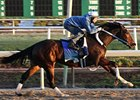Rachel Alexandra, pictured here during a previous work at Fair Grounds Race Course.