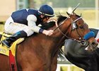 Celtic Dreamin will make his turf debut in the March 17 Crystal Water Handicap at Santa Anita.