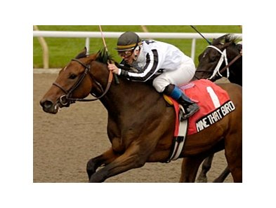 Mine That Bird won the Grey Stakes at Woodbine prior to coming to Richard Mandella's barn.