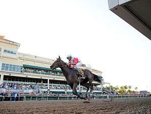 Orb Bounces Out of His Florida Derby Victory