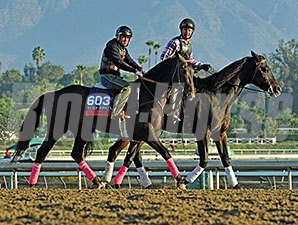 Handsome Mike preps for the Breeders' Cup.