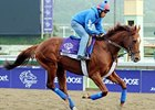 "Animal Kingdom<br><a target=""blank"" href=""http://photos.bloodhorse.com/BreedersCup/2012-Breeders-Cup/Works/26130247_gxH6nS#!i=2189106557&k=7PqtDgP"">Order This Photo</a>"