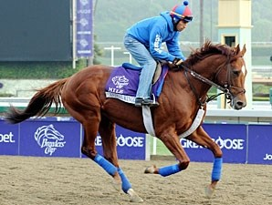 Animal Kingdom - Breeders' Cup 2012