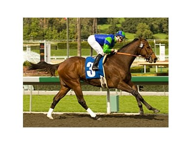 Undefeated Rail Trip tries graded stakes company for the first time in the Mervyn LeRoy Handicap.