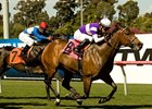 "Medaglia d'Amour wins her stakes debut in the Wilshire Handicap.<br><a target=""blank"" href=""http://www.bloodhorse.com/horse-racing/photo-store?ref=http%3A%2F%2Fpictopia.com%2Fperl%2Fgal%3Fprovider_id%3D368%26ptp_photo_id%3D8944599%26ref%3Dstory"">Order This Photo</a>"