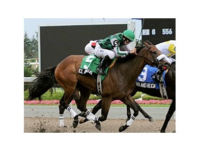 El Brujo will try to win his first stakes in Woodbine's Coronation Futurity.