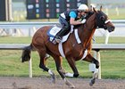 Mucho Macho Man working at Gulfstream Park