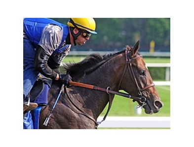 "Paynter<br><a target=""blank"" href=""http://photos.bloodhorse.com/AtTheRaces-1/at-the-races-2012/22274956_jFd5jM#!i=1878339165&k=pKSWC6c"">Order This Photo</a>"
