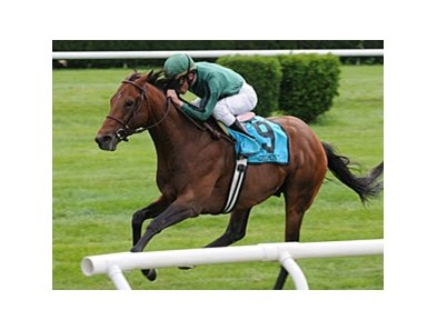 "Gio Point is the morning-line favorite for the Arlington Million. <br><a target=""blank"" href=""http://www.bloodhorse.com/horse-racing/photo-store?ref=http%3A%2F%2Fpictopia.com%2Fperl%2Fgal%3Fprovider_id%3D368%26ptp_photo_id%3D8330636%26ref%3Dstory"">Order This Photo</a>"