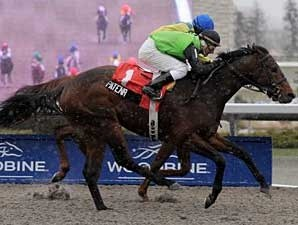 Patena wins the Display Stakes at Woodbine