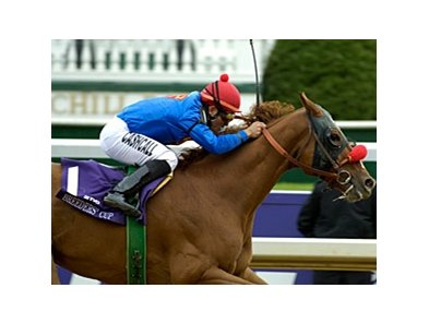 Helen of Troy was the dam of champion Thor's Echo, shown winning the 2006 Breeders' Cup Sprint.