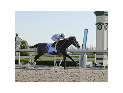 "Blue Grass winner General Quarters<br><a target=""blank"" href=""http://www.bloodhorse.com/horse-racing/photo-store?ref=http%3A%2F%2Fpictopia.com%2Fperl%2Fgal%3Fprovider_id%3D368%26ptp_photo_id%3D8000413%26ref%3Dstory"">Order This Photo</a>"