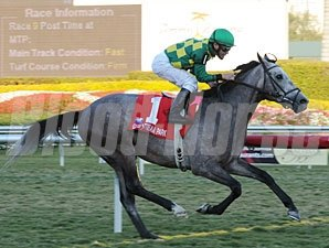 Paddy O'Prado wins the 2010 Palm Beach.