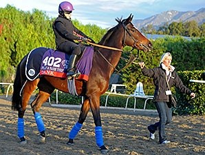 Dank - 2013 Breeders' Cup, October 29, 2013.