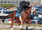 "Groupie Doll had her final pre-race preparations on November 25. <br><a target=""blank"" href=""http://photos.bloodhorse.com/AtTheRaces-1/at-the-races-2013/27257665_QgCqdh#!i=2935286322&k=FjMp2RH"">Order This Photo</a>"
