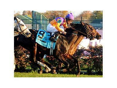 "2011 Breeders' Cup Mile winner Court Vision<br><a target=""blank"" href=""http://www.bloodhorse.com/horse-racing/photo-store?ref=http%3A%2F%2Fpictopia.com%2Fperl%2Fgal%3Fprovider_id%3D368%26ptp_photo_id%3D9729438%26ref%3Dstory"">Order This Photo</a>"