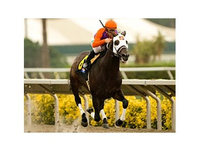 "Temple City is home free in the Cougar II.<br><a target=""blank"" href=""http://www.bloodhorse.com/horse-racing/photo-store?ref=http%3A%2F%2Fpictopia.com%2Fperl%2Fgal%3Fprovider_id%3D368%26ptp_photo_id%3D9124230%26ref%3Dstory"">Order This Photo</a>"