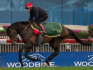 Brown Panther - Woodbine, October 17, 2014