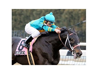 "I Want Revenge, an easy winner of the Gotham Stakes <br><a target=""blank"" href=""http://www.bloodhorse.com/horse-racing/photo-store?ref=http%3A%2F%2Fgallery.pictopia.com%2Fbloodhorse%2Fgallery%2FS631826%2Fphoto%2F7863922%2F%3Fo%3D1"">Order This Photo</a>"