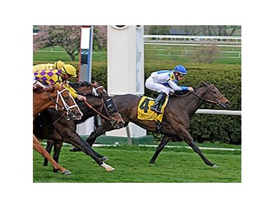 "Rutherienne is the one to beat in the Taylor Made Matchmaker Stakes. <br><a target=""blank"" href=""http://www.bloodhorse.com/horse-racing/photo-store?ref=http%3A%2F%2Fpictopia.com%2Fperl%2Fgal%3Fprovider_id%3D368%26ptp_photo_id%3D4177509%26ref%3Dstory"">Order This Photo</a>"
