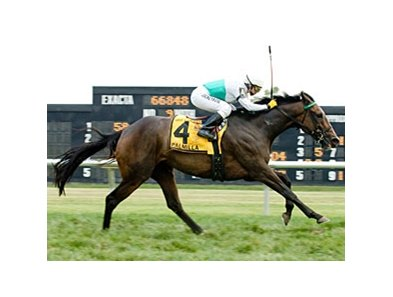 Palmilla won the Robert B. Dick Memorial at Delaware Park.