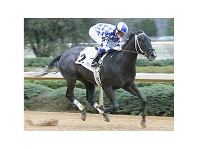 Dixieland Stakes winner Silver City faces 7 in the Derby Trial.