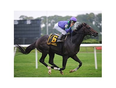 "Grand Couturier will try to bring Breeders' Cup Glory to Trainer Robert Ribaudo.<br><a target=""blank"" href=""http://www.bloodhorse.com/horse-racing/photo-store?ref=http%3A%2F%2Fpictopia.com%2Fperl%2Fgal%3Fprovider_id%3D368%26ptp_photo_id%3D6084314%26ref%3Dstory"">Order This Photo</a>"