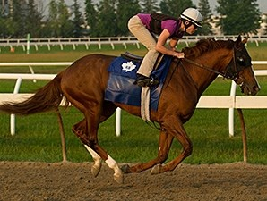 Man o' Bear - Woodbine, July 2, 2014.
