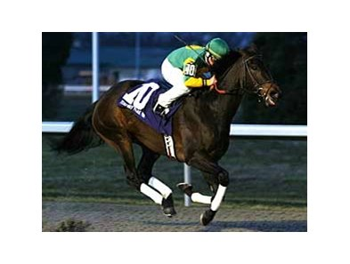 Lady Belsara winning the Wishing Well at her home track, Turfway Park, in Dec. 2007.