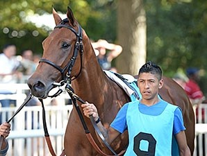 Lady Eli wins the 2014 Miss Grillo Stakes.
