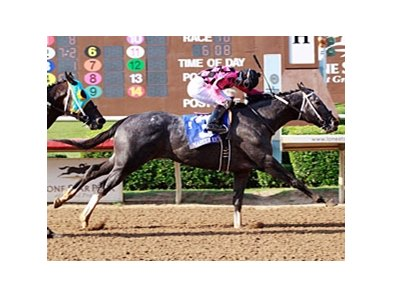 Master Rick wins the Lone Star Park Handicap.