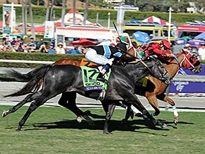 Mizdirection wins the 2013 Breeders' Cup Turf Sprint.