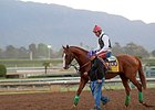 Martin: California Chrome Won't Race in Japan