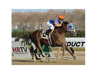 "Caixa Eletronica won the 2012 Fall Highweight by four lengths.<br><a target=""blank"" href=""http://photos.bloodhorse.com/AtTheRaces-1/at-the-races-2012/22274956_jFd5jM#!i=2231147431&k=JfsvKh8"">Order This Photo</a>"