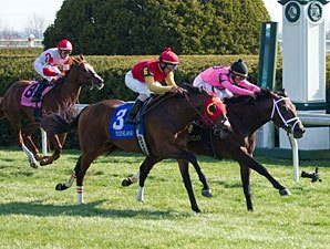Jack Milton Wins First Stakes in Transylvania
